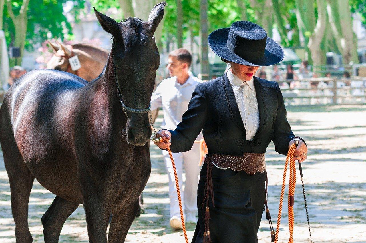 Quels sont les différentes races de chevaux de trait ?