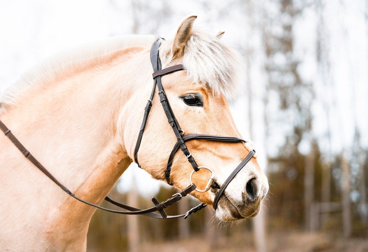 cheval de trait race
